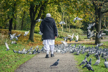 The Old Muslim Man Is Standing Into The Pigeons Group, Moses Gate Country Park, Bolton, England.