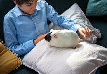 Teenage Boy Single Child Playing With Guinea Pig To Substitute A Friend During Quarantine Coronavirus Pandemic