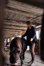 Woman Brushing Horse In Stable