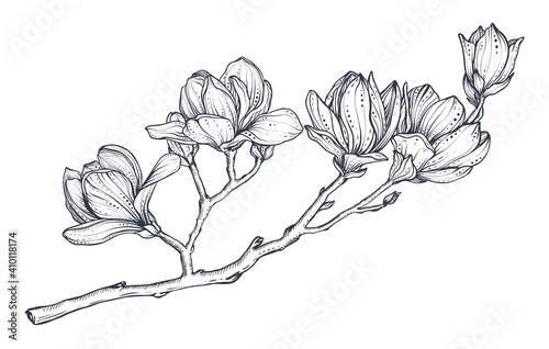 Cuadros en Lienzo Hand drawn vector magnolia branch
