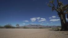 Dolly Shot Of Roadside Joshua Tree In The Desert