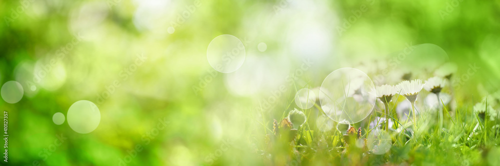 Fototapeta Abstract sunny spring background. Green meadow with wildflowers and bright bokeh. Concept for ecology and vacation with space for text