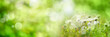 canvas print picture - Abstract sunny spring background. Green meadow with wildflowers and bright bokeh. Concept for ecology and vacation with space for text