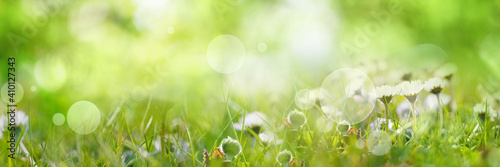 Sunny spring meadow with daisies. Horizontal natur background with short deep of focus and bright bokeh. Concept for ecology and leisure with space for text.