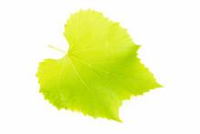 Grape Leaf Grape Leaf With White Background
