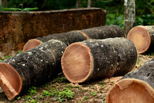 Coconut Tree Trunk Cut Into Pieces
