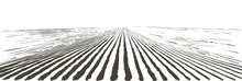 Vector Farm Field Landscape. Furrows Pattern In A Plowed Prepared For Crops Planting. Vintage Realistic Engraving Sketch Illustration.