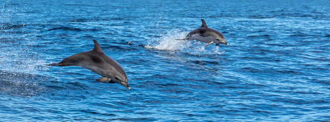 Dolphins playing in waves