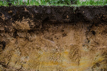 Cut Of Natural Soil With Different Layaers. Grass, Chernozem Soil And Clay Ground Wall After Working Excavator.