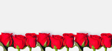 A Row Of Beautiful Red Roses Lies On A White Background. Holiday Concept - March 8, Women's Day, Valentine's Day, Holiday, Mother's Day, Banner. Place For Text. Postcard