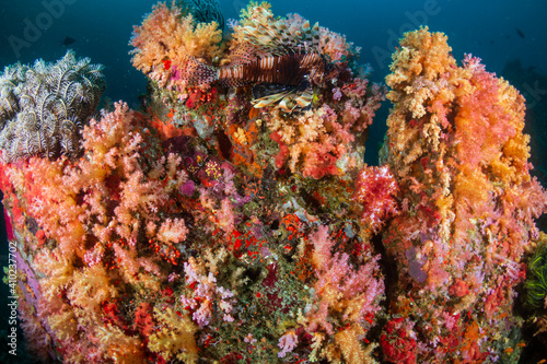 Fototapety, obrazy: Lionfish (Devil Firefish) on a tropical coral reef.