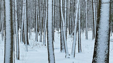 Barren Tree Trunk Background With Snow Landscape