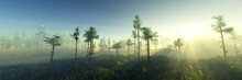 The Edge Of The Forest At Sunrise In The Fog, Morning Fog Over The Forest, The Rays Of The Rising Sun Over The Forest, Banner, 3D Rendering