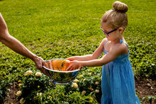 Girl Wearing Eyeglasses Putting Tomato In Bowl Held By Grandmother