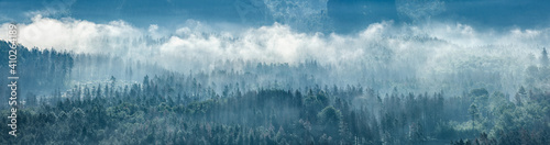 Fotografia, Obraz Panorama of endless forest with fog