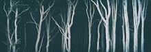 Dark Gloomy Forest With Spooky Bare Trees
