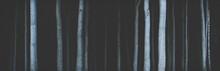 Panorama Of Tree Trunks In Dark Gloomy Forest