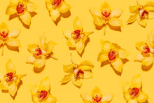 Pattern Of Heads Of Yellow Blooming Orchids