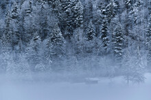 Snow Covered Trees In Forest During Foggy Weather