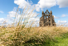 Whitby Abbey On Grassy Land Against Cloudy Sky During Sunny Day, Yorkshire, UK