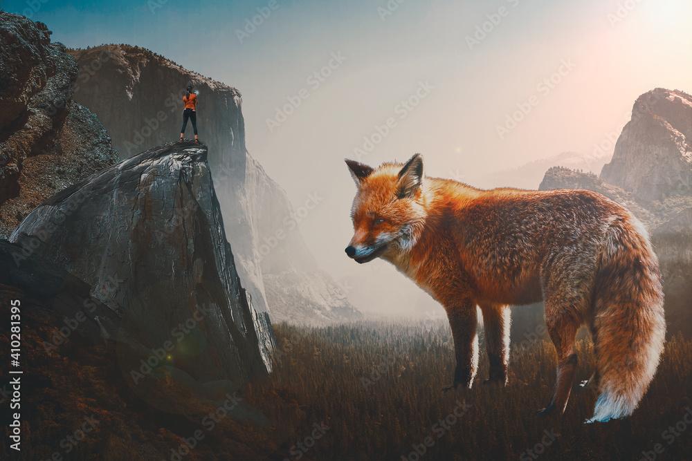 Fototapeta red fox vulpes