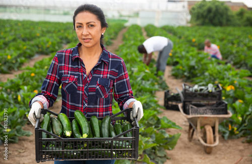 Fototapeta Peruvian woman working on vegetable plantation on spring day, carrying plastic box with freshly harvested zucchini obraz