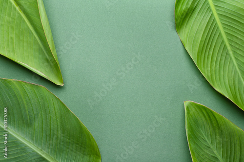 Fotografie, Obraz Green banana leaves on color background
