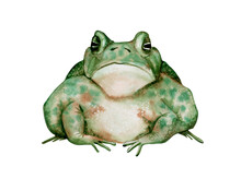Watercolor Illustration Isolated On A White Background: Sitting Green Toad With A Sad Face.Watercolor Illustration For Postcards, Decor, Print.
