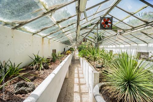 Fotografija greenhouse with plants (wicked plants: succulents, cacti)