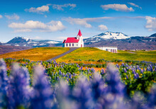 Traveling To Iceland. Charming Morning View Of Ingjaldsholl Church. Spectacular Summer Scene Of Iceland With Field Of Blooming Lupine Flowers And Snowy Peaks On Background.
