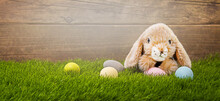 Bunny On Fresh Green Grass