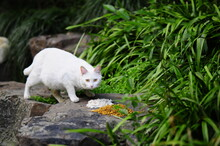 Homeless Cats Eating In The Park
