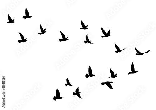 Fotografie, Obraz Flying birds silhouettes on white background