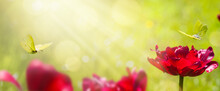 Art Abstract Blurred Spring Background Or Summer Background With Fresh Tulips Flowers And Butterfly