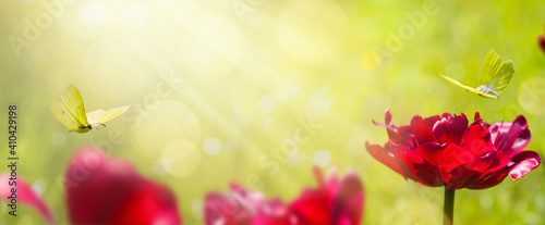 Obraz art abstract blurred spring background or summer background with fresh tulips flowers and butterfly - fototapety do salonu