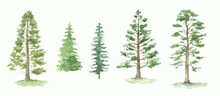 Green Pine Trees Watercolor Set. Fir Trees Silhouette. Forest