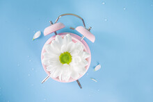 Spring Time Change Flatlay. Summer Back Concept. Retro Vintage Alarm Clock With Fresh, Beautiful White Spring Daisy Flower On Pastel Blue Background Top View Copy Space