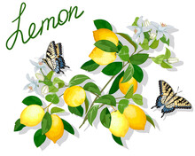 Illustration With Butterflies And Lemons.Butterflies And Lemon Branches With Flowers And Fruits In Color Illustration.