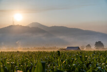 Corn Fields During Morning Sunrise With Foggy At Mountains Layers Are Background At Mae Sariang District Mae Hong Son Province Thailand.