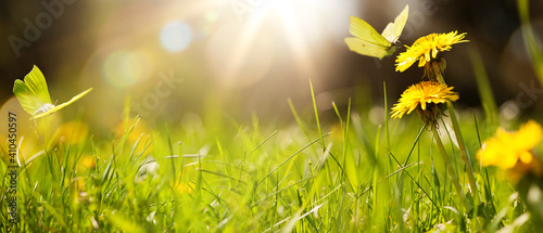 art abstract spring background or summer background with fresh grass - fototapety na wymiar