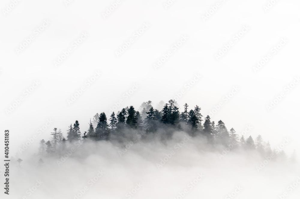 Fototapeta Pienińskie lasy we mgle.