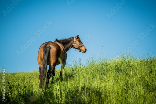 Canvas horse in the meadow