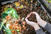 Mains Tenant Du Compost  Au Dessus Du Composteur Avec Déchets Organiques