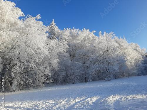 Fototapeta Zimowy świat obraz