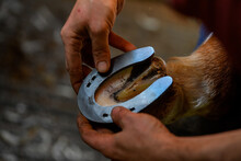A Farrier Attaching A Horseshoe To A Horse Hoof