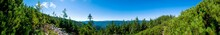 Beautiful Panorama With Alpine Pine And Mountains Under Blue Sky