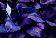 Closeup Nature View Of Purple Leaves Background And Dark Tone