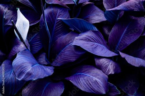 Fotografija closeup nature view of purple leaves background and dark tone