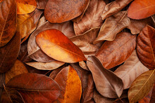 Closeup Nature View Of Dry Leaves Background And Dark Tone