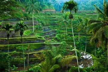 Tegelalang Rice Terraces